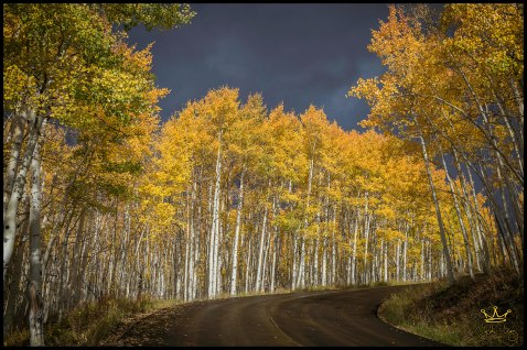 Color Road - JCK